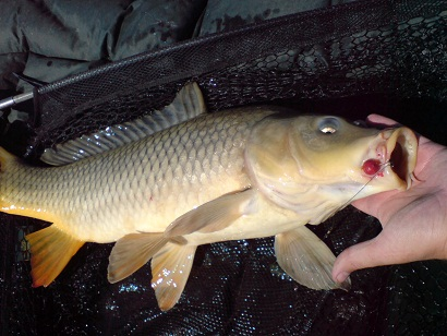 http://feeder.at.ua/2012/0209/fish2.jpg