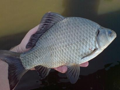 http://feeder.at.ua/2012/0209/fish3.jpg