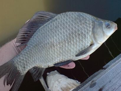 http://feeder.at.ua/2012/0209/fish4.jpg