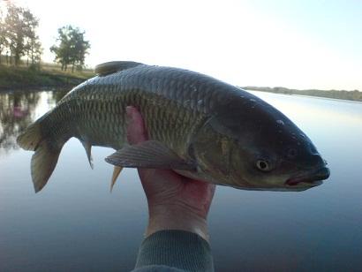 http://feeder.at.ua/2012/0209/fish6.jpg