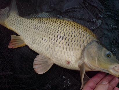 http://feeder.at.ua/2012/0706/fish2.jpg