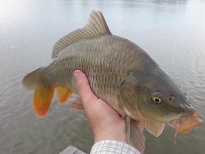 http://feeder.at.ua/2012/0706/fish3.jpg