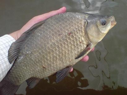 http://feeder.at.ua/2012/0706/fish6.jpg