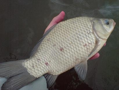 http://feeder.at.ua/2012/0706/fish7.jpg