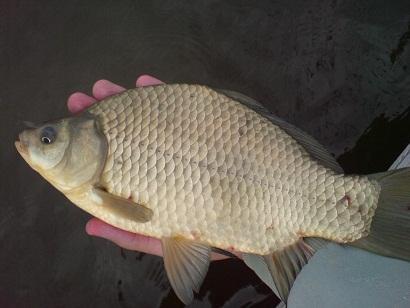 http://feeder.at.ua/2012/0706/fish8.jpg