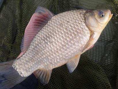 http://feeder.at.ua/2014/2104/fish4.jpg