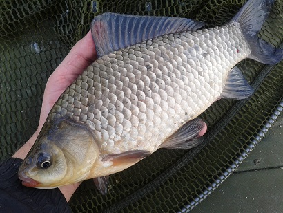 http://feeder.at.ua/2014/2104/fish7.jpg