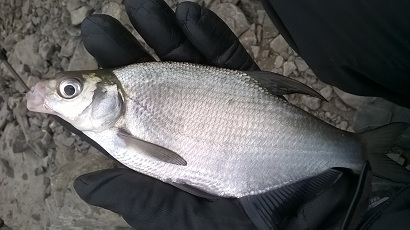 http://feeder.at.ua/2015/0103/fish2.jpg